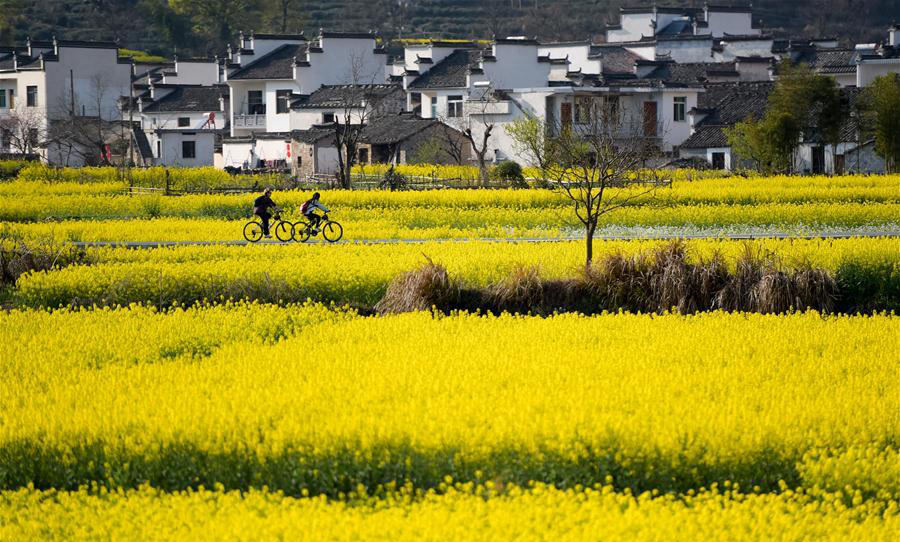 China drives way forward in constructing ecological civilization