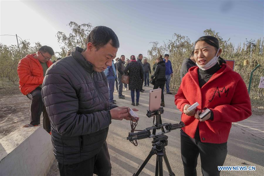 Farmer promotes online jujube business by live broadcast in NW China's Xinjiang