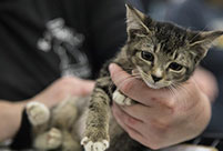 Mega Adoption event held in Texas, U.S.