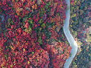 Scenery of red leaves of Changshou Mountain in Zhulin, China's Henan
