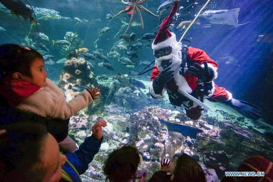 Scuba Claus Dive held in Vancouver