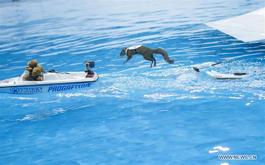 Squirrels perform water-skiing in Toronto