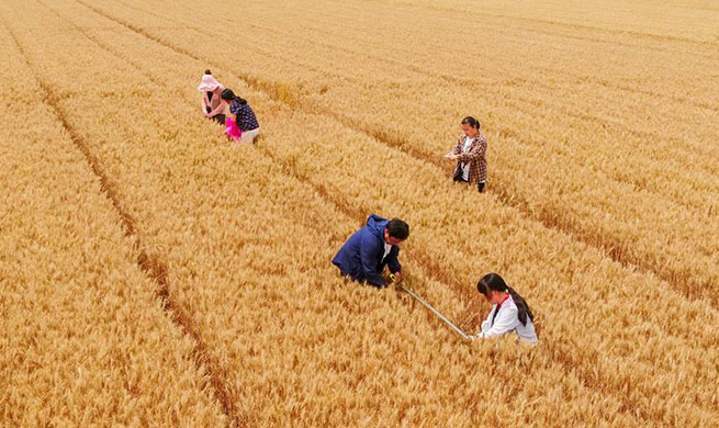 Agricultural technicians conduct yield monitoring in Hebei