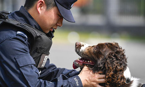 "In pics: Sniffer dog ""Hei Sa"" in Baishan, NE China"