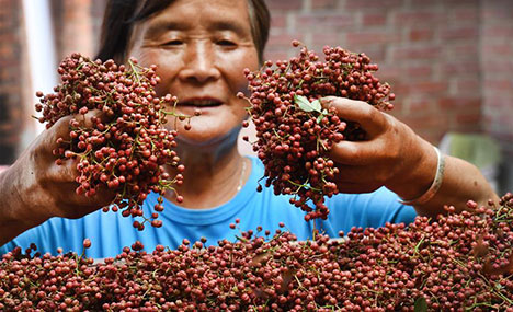 Chinese prickly ash planting to help farmers raise income