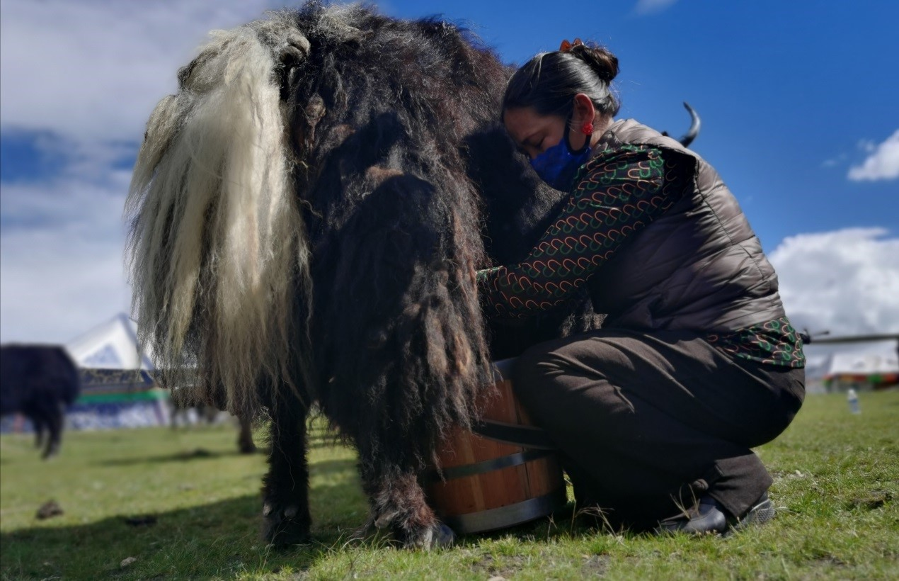 Tibetan township gets rid of poverty, embraces prosperity
