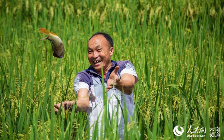 Harvest brings joy to Chinese farmers