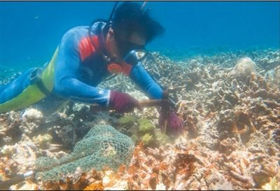 Photo shows researchers of the Hainan South China Sea Institute of Tropical Ocean (HITO) repair corals under the sea. (Photo/Courtesy of HITO)