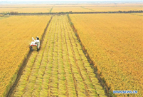 Farmers enjoy harvest in N China