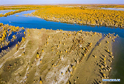 Autumn scenery of desert poplar forest along Tarim River in Xinjiang