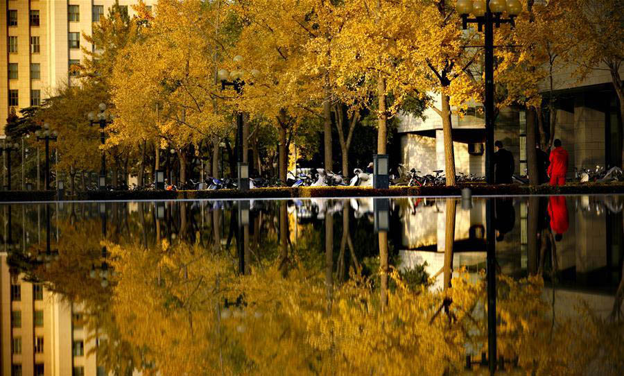 Autumn scenery at campus of Tsinghua University in Beijing