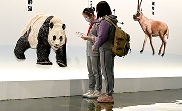 Museum sheds light on giant pandas