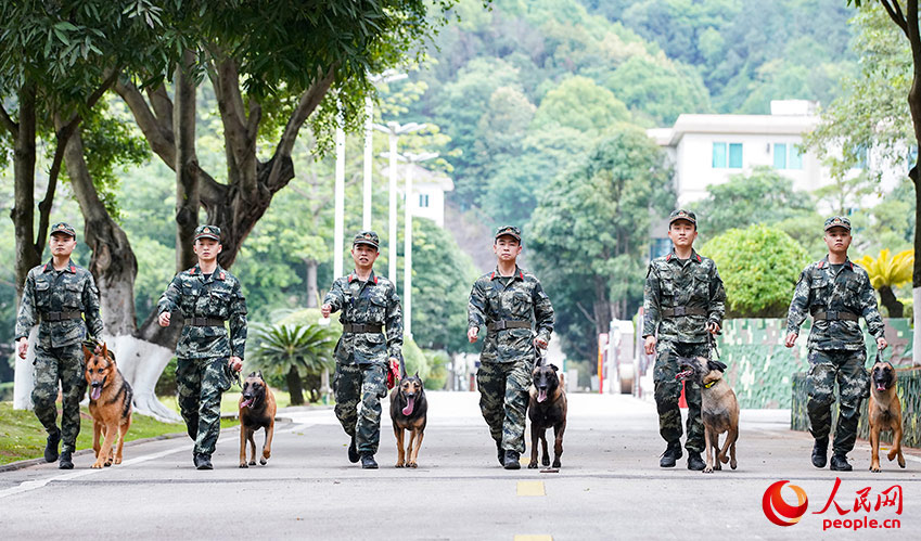 Loyal comrade in arms: military dogs trained in S China