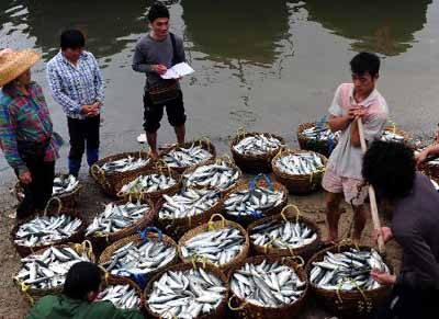 Winter fishery in Hainan provides spring festival market with abundant supply