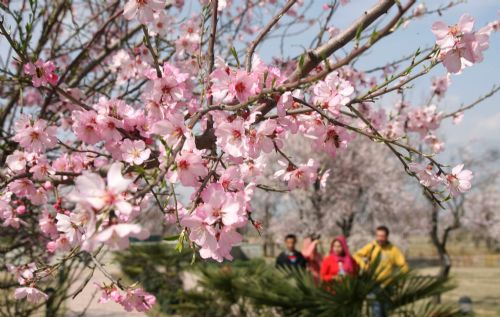Indian-controlled Kashmir sees arrival of spring