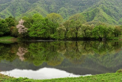 Wetland scenery in Shennongjia