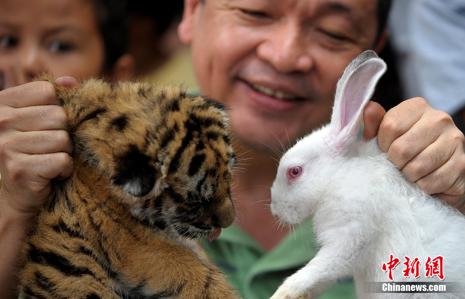 Tiger leaves, Rabbit arrives in Asia