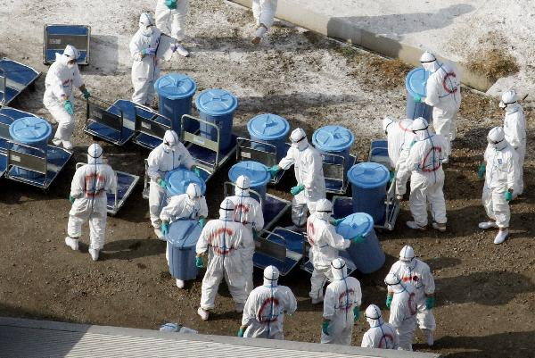 Japan culls chickens as bird flu outbreak spreads