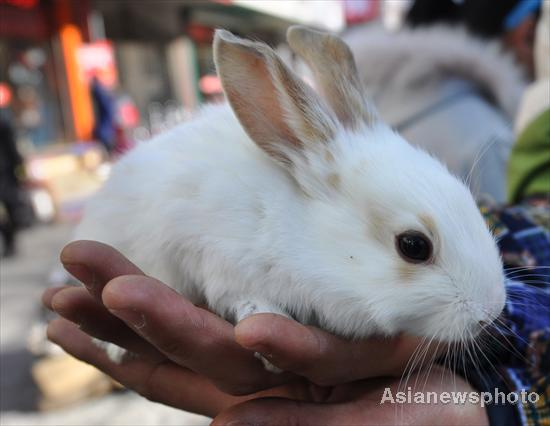 Atmosphere heats up ahead of Year of Rabbit
