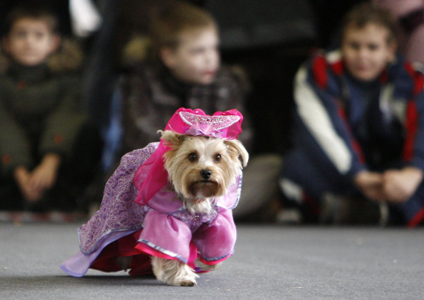 Dogs' costume show