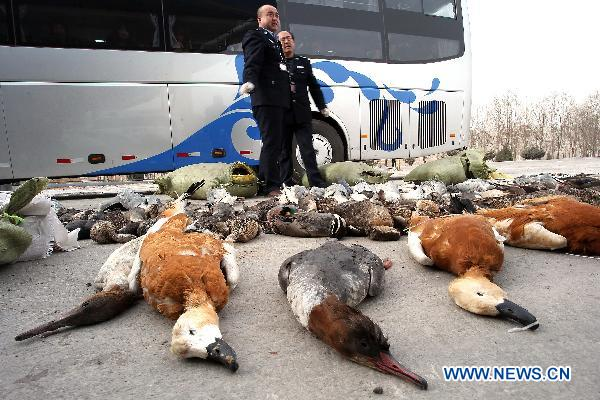 Over 800 wild birds confiscated in NW China's Gansu