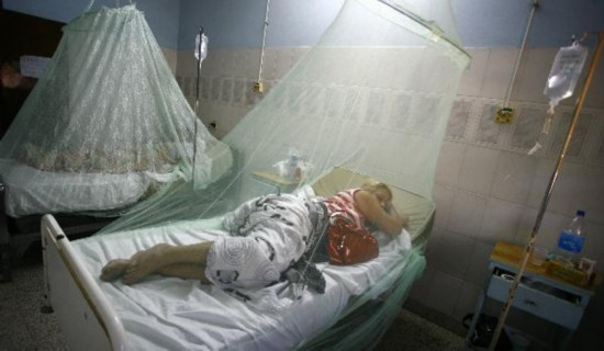 Dengue fever raging in Paraguay with 22 deaths this year