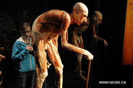 Amazing Body Worlds &Cycle of Life exhibition fascinates visitors in NY