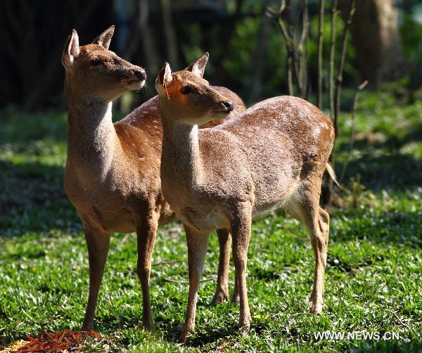 Taiwan to send deer, goats to Shandong as gift