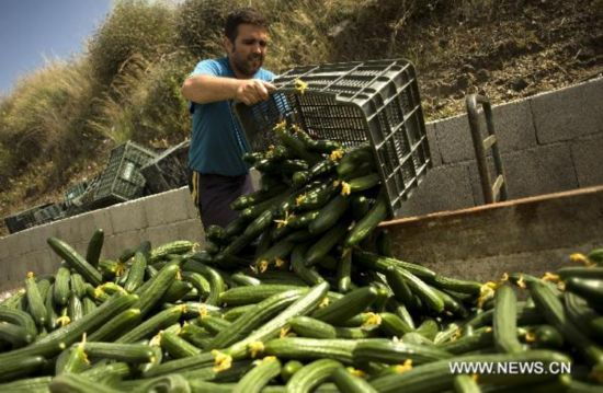 E. coli cucumber blame brings loss to Spanish agriculture