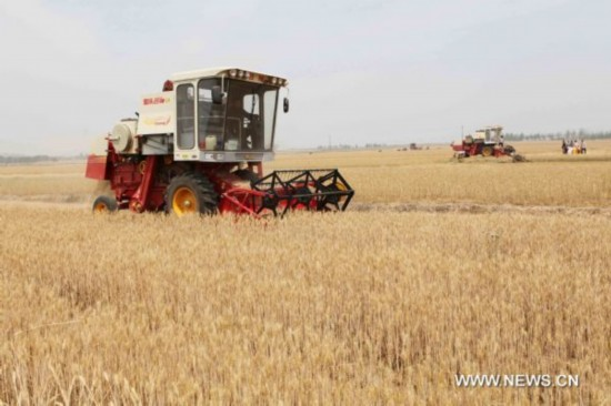 Summer wheat harvest in E China