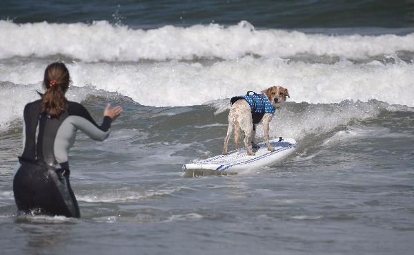 Surfing dogs return to Imperial Beach