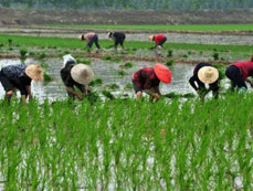 South China complete early-rice planting amid lingering drought