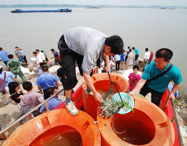 Fish fries put into Yangtze River for economic purposes, natural reservation