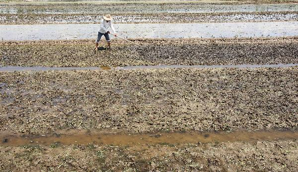 Farmers resume work to recover from floods in E. China
