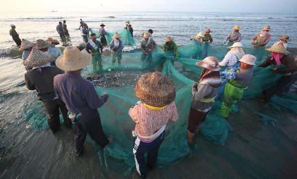 Fishermen harvest fish in Guangdong
