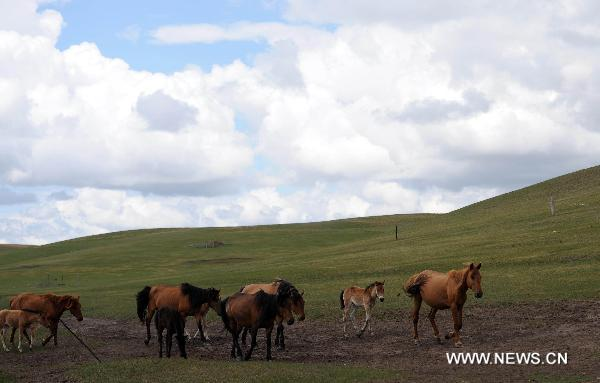 Picturesque scenery of Hulunbuir Grassland