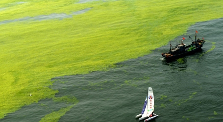 Green algae to continue spread off China's east coastline