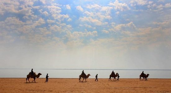 Tourists ride camels near China's largest desert lake Hongjiannao in Yulin, north China's Shaanx Province, Sept. 24, 2011. Hongjiannao is shrinking as a result of climate change and human activities, and may vanish in a few decades. Its lake area, which measured more than 6,700 hectares in 1996, has shrunk to 4,180 hectares. Its water level is declining by 20-30 centimeters annually and its water PH value has risen to 9.0-9.42 from 7.4-7.8. (Xinhua/Liu Yu)