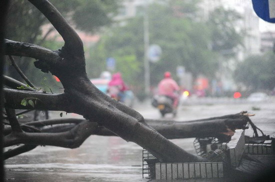 A fallen tree is seen on a road in Qionghai, south China's Hainan Province, Sept. 29, 2011. Typhoon Nesat was predicted to land in Hainan later Thursday, bringing heavy rainfalls to the island. (Xinhua/Meng Zhongde)