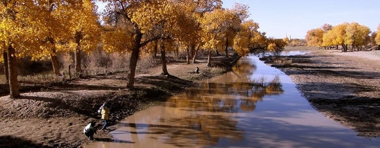 Photo taken on Sept. 28, 2011 shows autumn scenery of populus euphratica forests in Ejina Banner, north China's Inner Mongolia. The populus euphratica forests here, with an area of 390,000 mu, or 26,000 hectares, is one of the world's most famous populus euphratica forests. The golden leaves and sunshines here in autumn is able to attract more than 100,000 person-times annually. (Xinhua/Zhao Tingting)