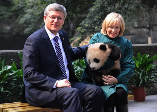 Visiting Canadian Prime Minister Stephen Harper looks on while his wife Laureen holds a panda at a zoo in Chongqing, southwest China, Feb. 11, 2012. (Xinhua/Li Jian)
