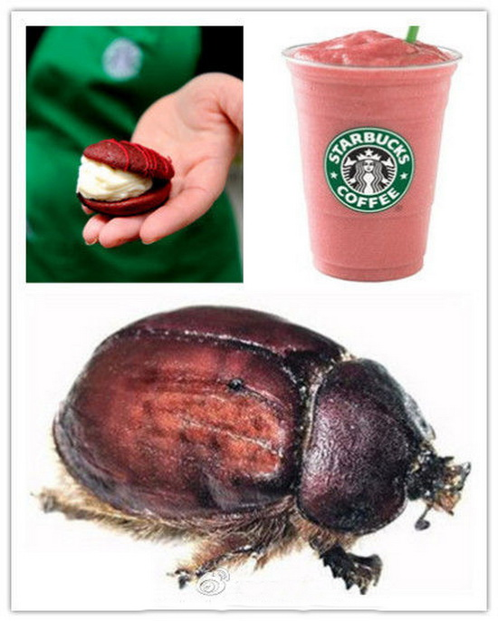 starbucks admits using dye from bugs people  39 s daily online Red Food Coloring Ingredients  Bugs Used For Red Food Coloring