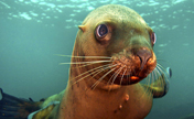 Cute sea lion likes taking photos