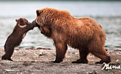 Funny pictures:the world of brown bears