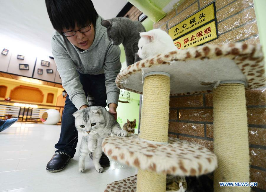 Shopkeeper Gao Ming plays with a cat at her cat-themed coffee bar in Harbin, capital of northeast China's Heilongjiang Province, Dec. 13, 2012. (Xinhua/Wang Kai)