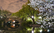 Breathtaking Photos of Central Park