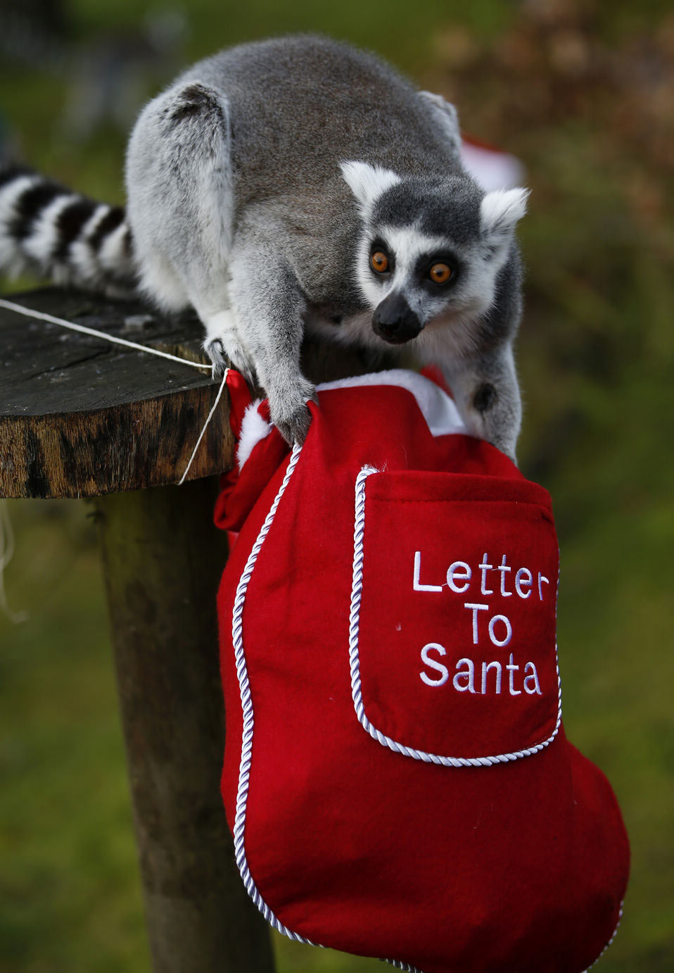 Animals Receive Christmas Treats At Zsl Whipsnade Zoo People S
