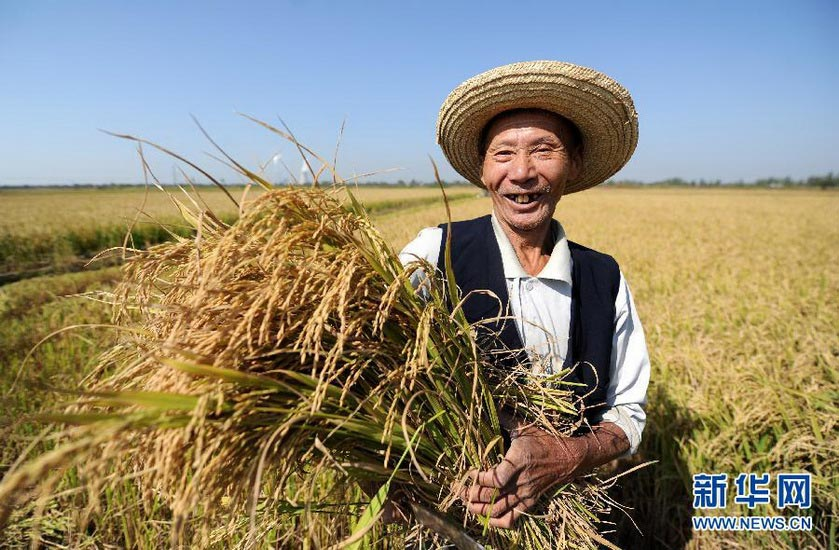 Sustained growth of grain output for nine years: