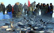What a catch: Ice fishing in northeast China
