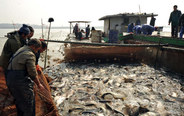 Winter fish harvest starts in China's Jiangxi